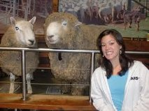 Sheeps wife